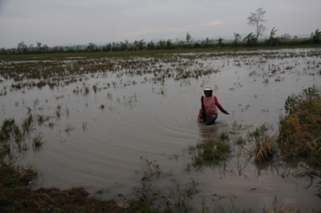 In some fields in the Philippines, more than two feet of water still remains.